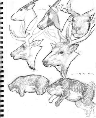graphite/ink sketches
