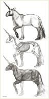 Unicorn Orthographics